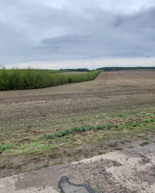 Agroforst beim TLLLR in Dornburg